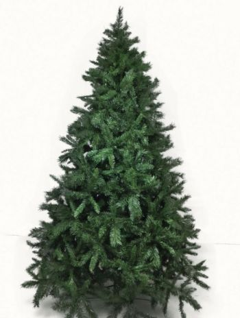 Spruce Pine Christmas Tree
