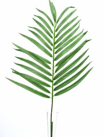 Parlour Palm Leaf