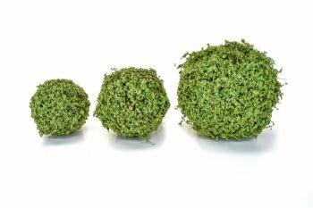 Topiary Moss/Twig Ball