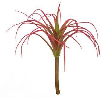Tillandsia Succulent Pick