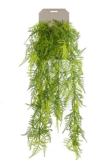 Asparagus Plumosus Bush