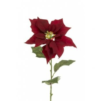 Poinsettia x3 Saver Pack