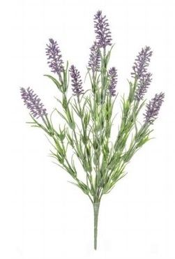 Lavender Flowering Bush