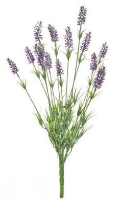 Lavender Flowering Bush Plant