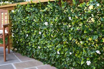 Extendable Hedge