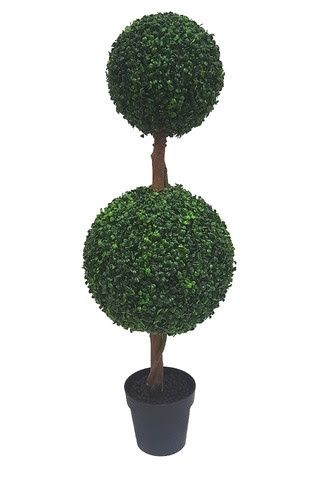 Double Topiary Boxwood Tree