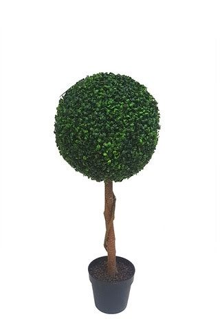 Single Topiary Boxwood Ball Tree
