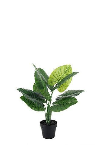 Deluxe Taro Leaf Plant