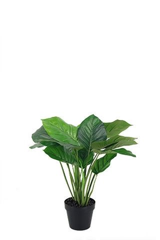 Philodendron Potted Leaf Plant