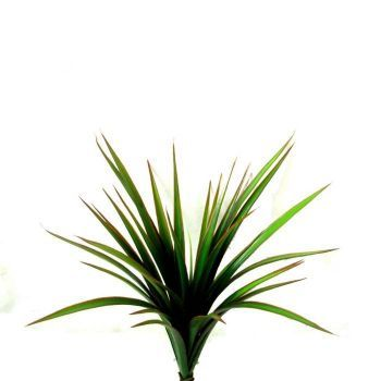 Yucca Plant Bush UV