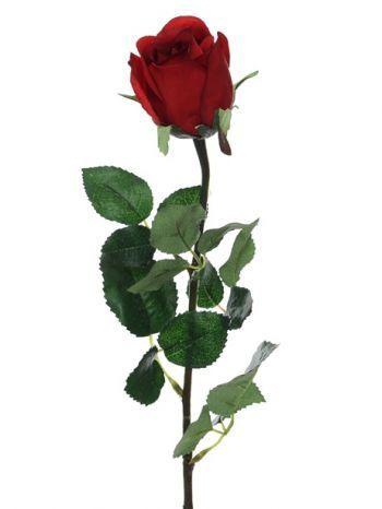 Prize Rose Bud
