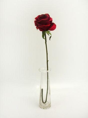 Prize Medium Rose