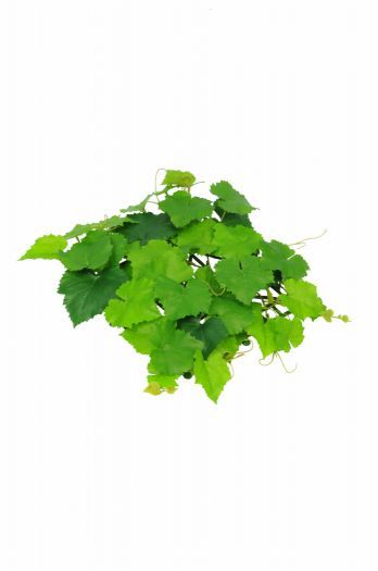 Topiary Grape Vine Mat FR