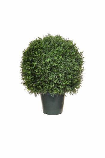 Topiary Cedar Ball