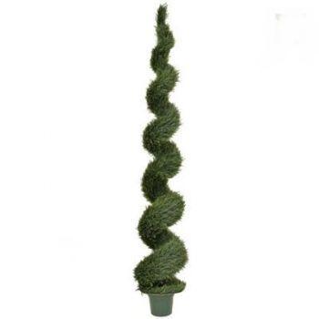 Topiary Cedar Spiral UV