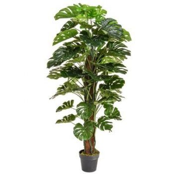 Monstera Tree