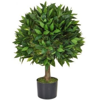 Bay Laurel Ball Tree