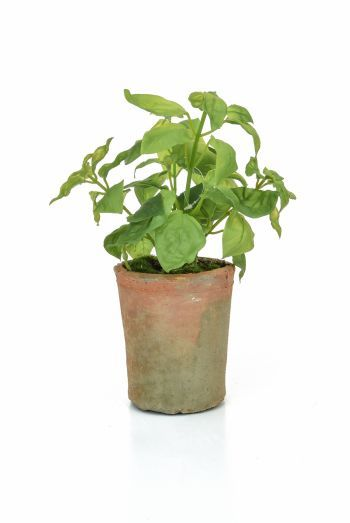 Potted Herb - Basil