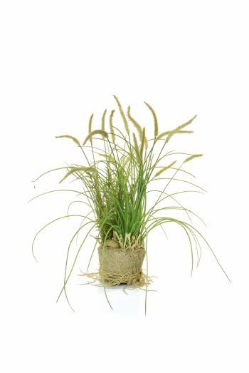 Grass in sand Arrangement