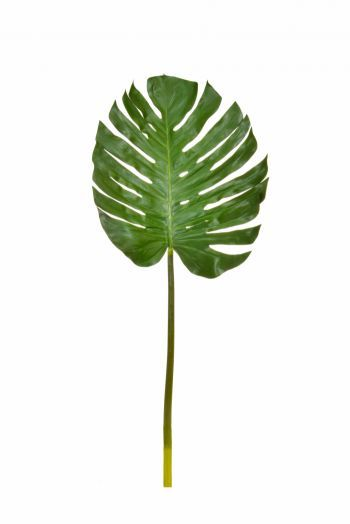 Monsteria Leaf Large