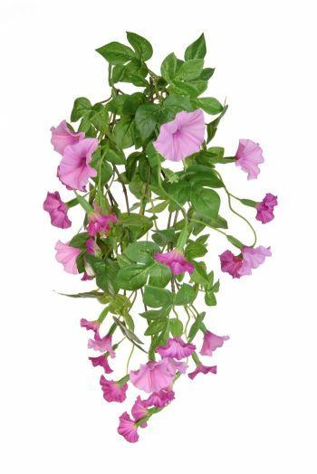Petunia Trailing Bush