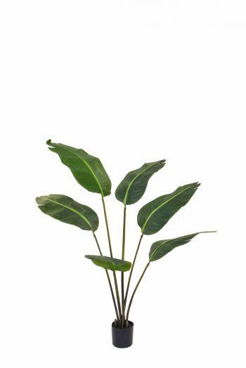 Bird of Paradise Plant FR