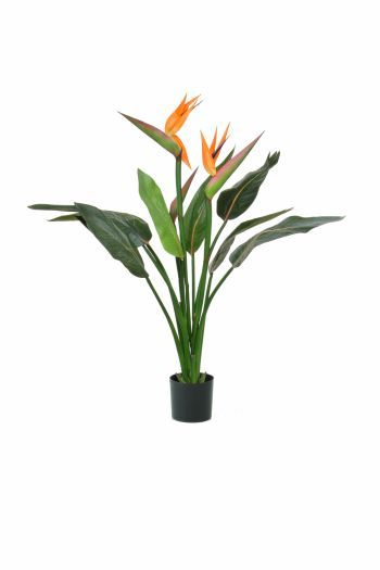 Tropical Bird of Paradise Plant FR