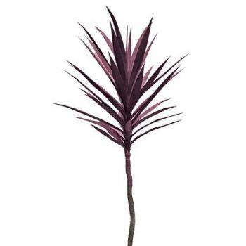 Yucca Stem Plant
