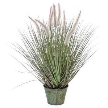 Dogtail Grass with Metal Pot