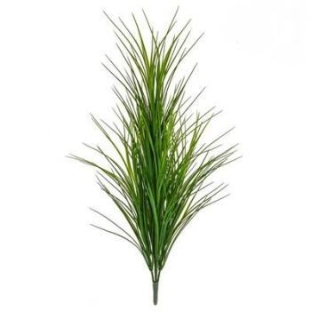 Wheat Grass Bush FR UV