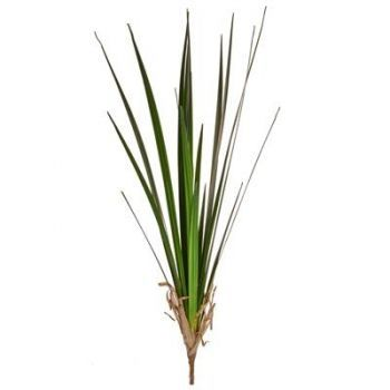 Reed Grass
