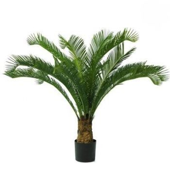 Cycas Palm Tree UV