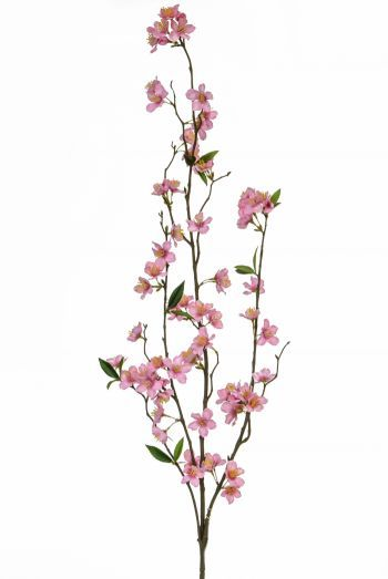 Cherry Blossom Branch FR