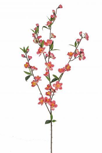 Cherry Blossom FR