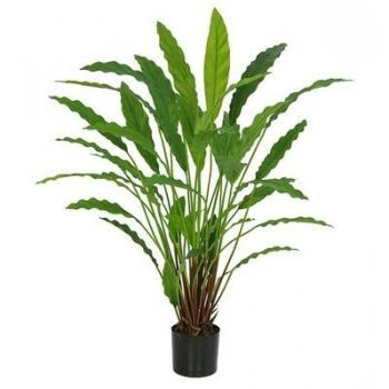 Potted Calathea Plant FR