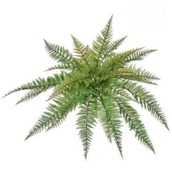 Leather Fern UV FR