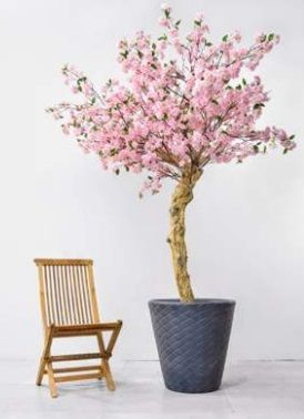 Cherry Tree on Coffee Stem in Pot