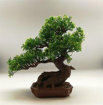 Silk Bonsai Tree Uk Bonsai Tree