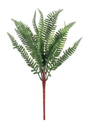 Sword Fern Spray