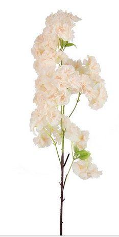 Rich Cherry Blossom