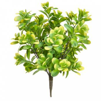 Boxwood Bush UV