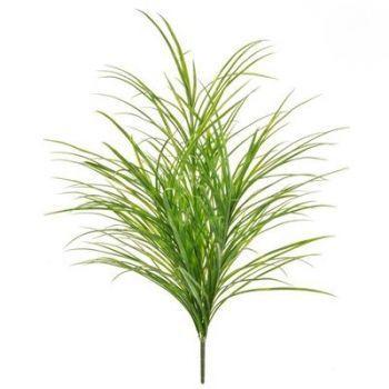 Sword Grass FR