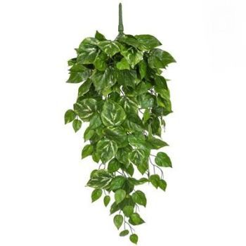 Pothos Garlands Trail FR UV