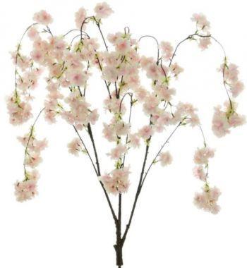 Weeping Cherry Blossom Branch
