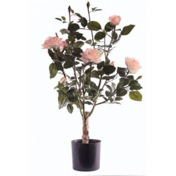 Rose Lady Tree