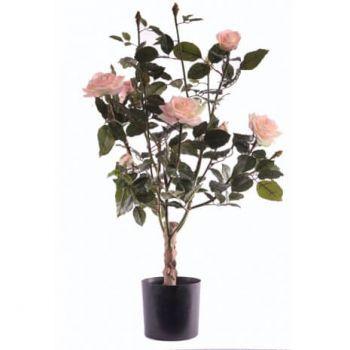 Rose Lady Tree
