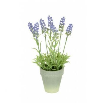 Hybrid Lavender In Paper Pot