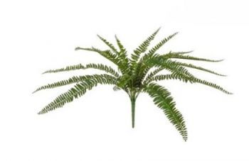Boston Fern UV FR