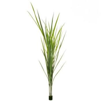Grass Reed UV FR