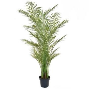 Areca Palm Tree UV FR